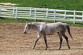 동물, 말 (발굽포유류), 포유류, 승마, 말과동물, 백마