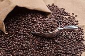 커피 (뜨거운음료), 오브젝트, 커피콩 (커피)