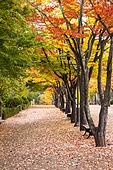 가을, 계절, 풍경 (컨셉), 단풍 (가을), 단풍나무 (낙엽수)