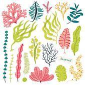 Sea plants and aquatic marine algae. Seaweed set vector illustration isolated on white.