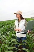 Agronomist examining plant in corn field