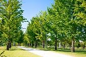 공원, 환경, 나무, 산책길 (보행로), 산림욕, 길