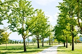 공원, 환경, 나무, 산책길 (보행로), 길