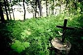 십자가,부활절,고난주간,사순절,나무십자가,숲,나무