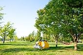 캠핑 (아웃도어), 텐트, 나무, 들판