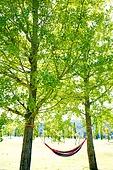 캠핑 (아웃도어), 나무, 해먹