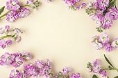 백그라운드, 꽃
