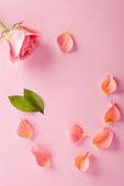 꽃, 화장품, 미용제품, 분홍, 로션 (미용제품)