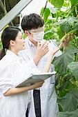 한국인, 여성, 연구 (주제), 농업, 백색가운, 생물학자, 남성