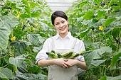 한국인, 오이, 채소밭 (경작지), 농부 (농수산업), 귀농, 여성, 미소, 만족