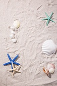 여름, 계절, 오브젝트 (묘사), 모래 (자연현상), 조개류 (쌍각류), 소라껍질 (개각), 불가사리