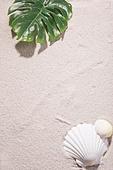 여름, 계절, 오브젝트 (묘사), 모래 (자연현상), 치즈나무 (열대관목), 조개류 (쌍각류), 백그라운드