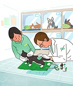 애완동물 (길든동물), 동물병원, 수의사, 진찰 (의료행위), 고양이 (고양잇과), 치료