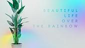 백그라운드 (주제), 무지개, 라이프스타일, 인테리어, 꿈같은 (컨셉), 식물, 화분