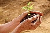Holding seedlings