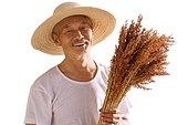 Farmers take sorghum