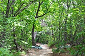 산, 풍경 (컨셉), 숲, 길, 산책길 (보행로), 산림욕