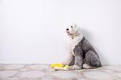 강아지, 개 (개과), 라이프스타일, 애완동물 (길든동물)