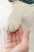 강아지, 라이프스타일, 사랑 (컨셉)