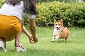 개, 강아지, 댕댕이, 라이프스타일, 웰시코기 (순종개), 애완동물 (길든동물), 애견, 실외