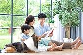 가족, 집 (주거건물), 애완동물 (길든동물), 함께함 (컨셉), 거실, 미소, 밝은표정, 셔틀랜드쉽독 (콜리), 책, 읽기 (응시)