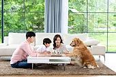 가족, 집 (주거건물), 애완동물 (길든동물), 골든리트리버 (리트리버), 함께함 (컨셉), 거실, 미소, 체스