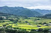농업 (주제), 시골풍경 (교외전경), 벼, 벼과식물, 쌀, 풍경 (컨셉)