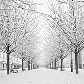 morning view on snow tree on Kampa island, Prague