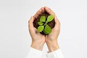사람, 누끼, 환경, 환경보호 (환경), 환경보호, 환경이슈, 식물, 자연 (주제), 풀 (식물), 생명, 새싹