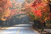 내장산 가을
