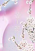 봄, 계절, 꽃, 파스텔톤 (색상강도), 벚꽃
