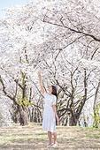 여성, 봄, 벚꽃, 벚나무 (과수), 잡기 (물리적활동), 가지 (식물부분)