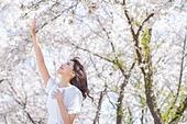 여성, 봄, 벚꽃, 벚나무 (과수), 잡기 (물리적활동), 가지 (식물부분), 바람