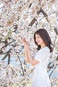 여성, 봄, 벚꽃, 벚나무 (과수), 관찰