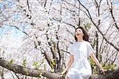 여성, 봄, 벚꽃, 벚나무 (과수), 미소, 휴식, 가지 (식물부분), 앉기 (몸의 자세)