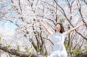 여성, 봄, 벚꽃, 벚나무 (과수), 미소, 휴식, 가지 (식물부분), 앉기 (몸의 자세), 만족, 만세, 눈감음 (정지활동)