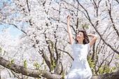 여성, 봄, 벚꽃, 벚나무 (과수), 미소, 휴식, 가지 (식물부분), 앉기 (몸의 자세), 만족