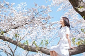 여성, 봄, 벚꽃, 벚나무 (과수), 미소, 휴식, 가지 (식물부분), 앉기 (몸의 자세), 눈감음 (정지활동), 바람