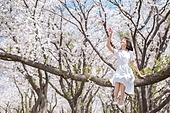 여성, 봄, 벚꽃, 벚나무 (과수), 미소, 휴식, 가지 (식물부분), 앉기 (몸의 자세), 손들기