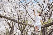 여성, 봄, 벚꽃, 벚나무 (과수), 미소, 휴식, 가지 (식물부분), 앉기 (몸의 자세), 햇빛 (빛효과), 손들기, 가리기 (제스처)
