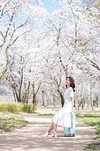 여성, 봄, 벚꽃, 벚나무 (과수), 교외전경 (Setting), 여행, 산책길 (보행로)