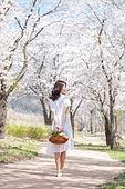 여성, 봄, 벚꽃, 벚나무 (과수), 교외전경 (Setting), 여행, 뒷모습