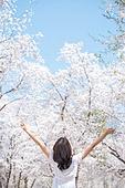 여성, 봄, 벚꽃, 벚나무 (과수), 교외전경 (Setting), 여행, 팔들기 (제스처), 뒷모습