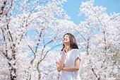 여성, 봄, 벚꽃, 벚나무 (과수), 교외전경 (Setting), 여행