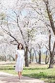 여성, 봄, 벚꽃, 벚나무 (과수), 교외전경 (Setting), 여행, 길, 산책길 (보행로), 걷기 (물리적활동), 미소