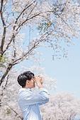 남성, 봄, 벚꽃, 휴식, 카메라, 촬영