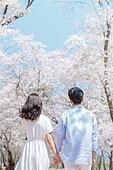 커플 (인간관계), 봄, 여유로운주말 (레저활동), 벚꽃, 데이트, 손잡기, 뒷모습