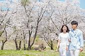 커플 (인간관계), 봄, 여유로운주말 (레저활동), 벚꽃, 데이트, 걷기 (물리적활동)