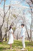 커플 (인간관계), 봄, 여유로운주말 (레저활동), 벚꽃, 데이트, 미소