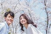 커플 (인간관계), 봄, 여유로운주말 (레저활동), 벚꽃, 데이트, 미소, 행복